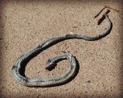snakeskin1