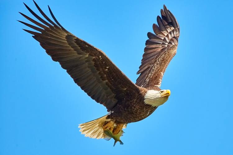 Eagle life out of